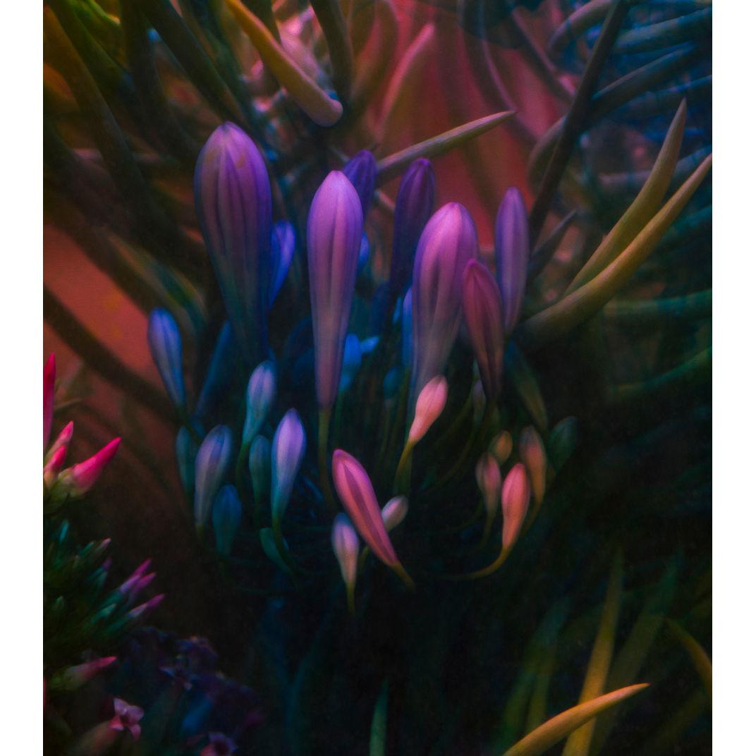 The Sweet Nectar by Javiera Estrada