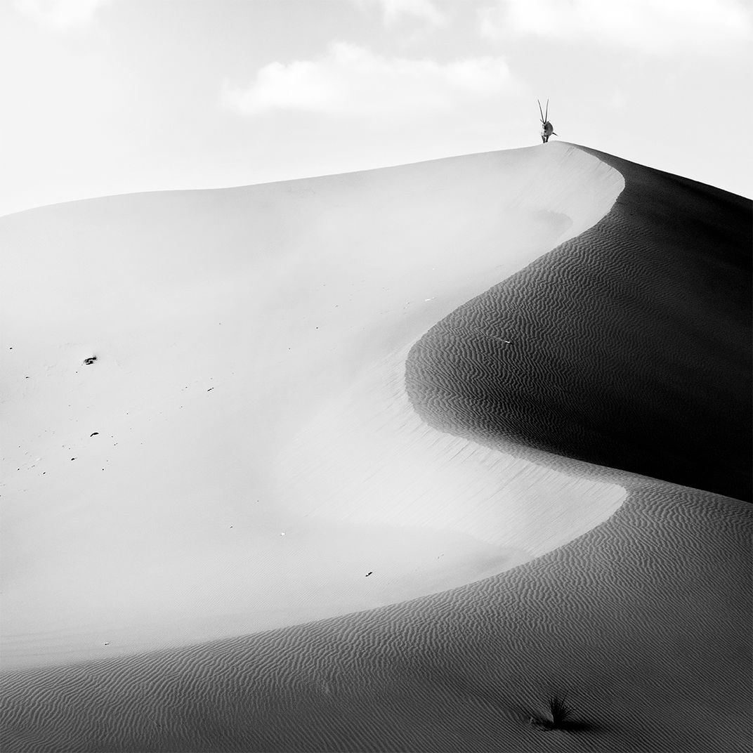 Dunes and Oryx by Alexandre Manuel