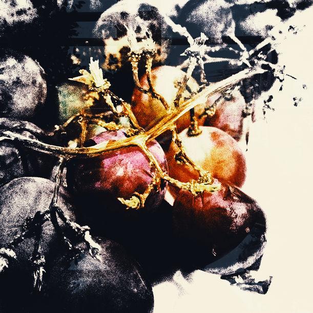 Old Grape in dish No.1 by Lert Kawcharoenpol