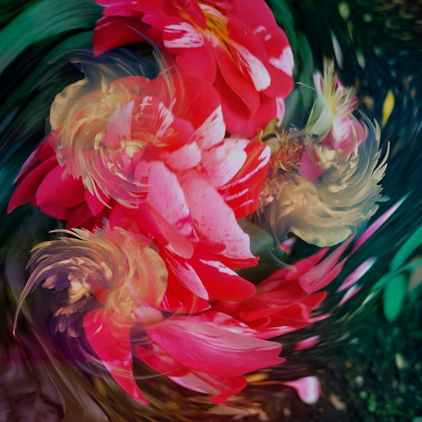 Abstract garden #3 by Larisa Siverina