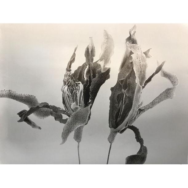 Gardenia-Forever by Chu Chu