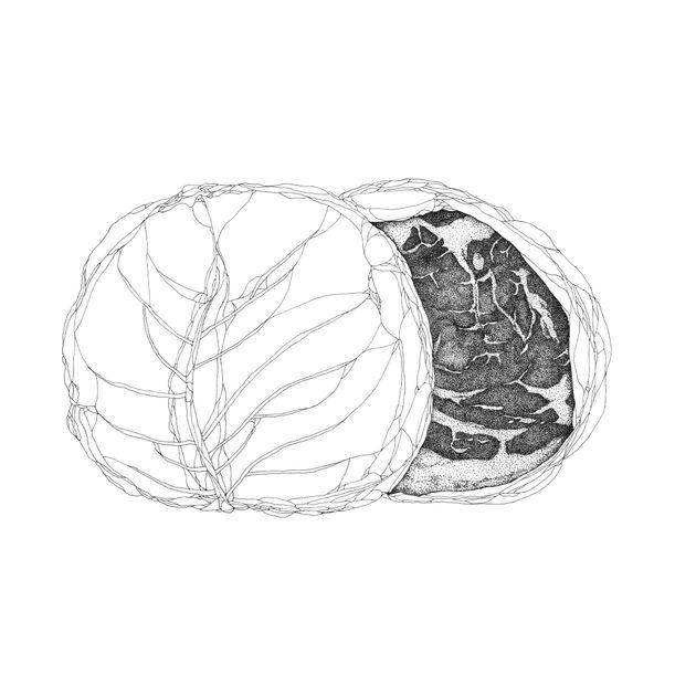 Cabbage by Sara Shimizu