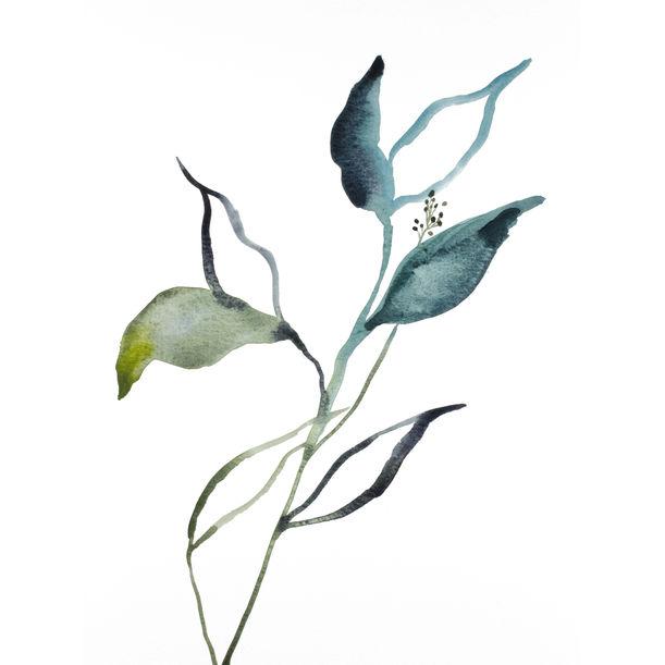 Plant Study No. 82 by Elizabeth Becker