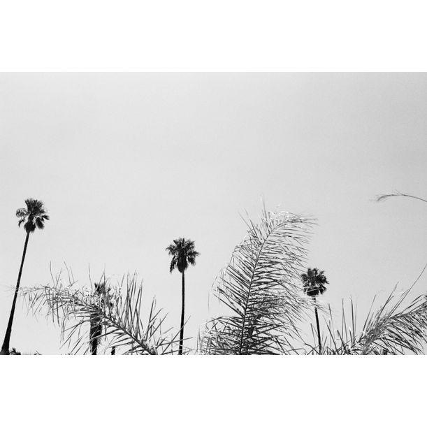 Shady Palms by gutterdust