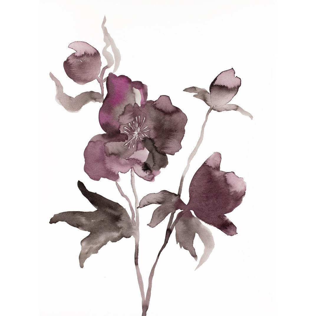 Hellebore No. 11 by Elizabeth Becker