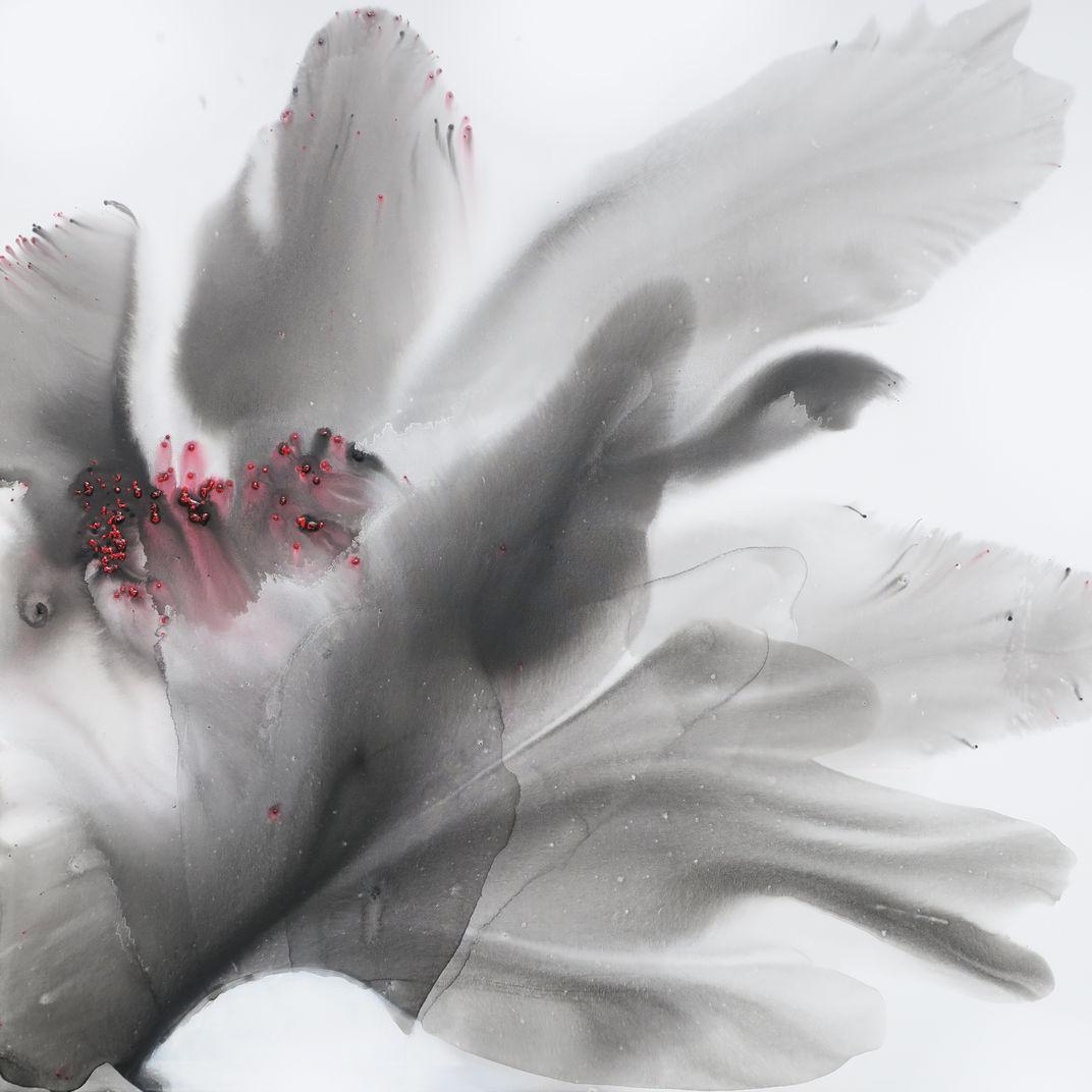 Iris Nigricans by Muriel Napoli