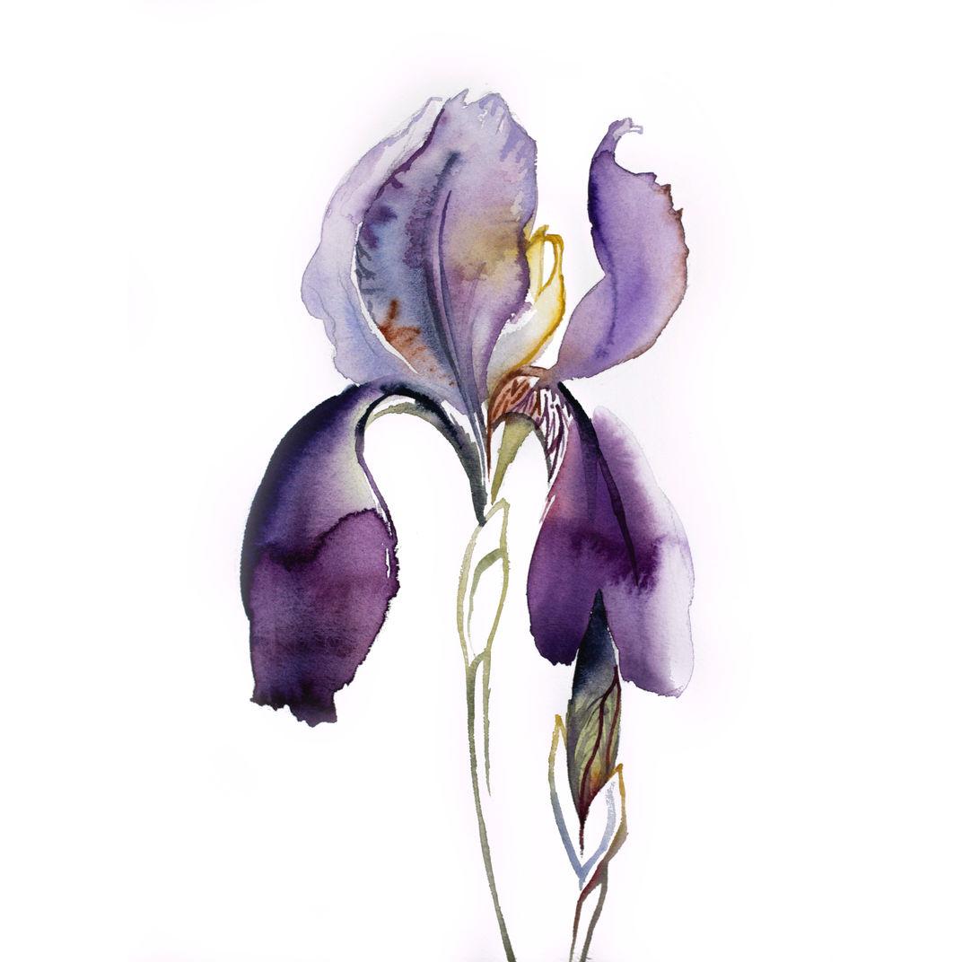 Iris No. 125 by Elizabeth Becker