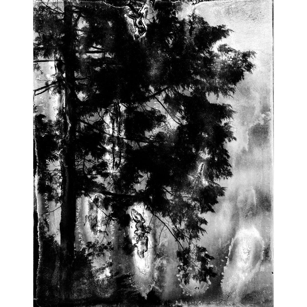 Spirit of Forest 02 by Yasuo Kiyonaga