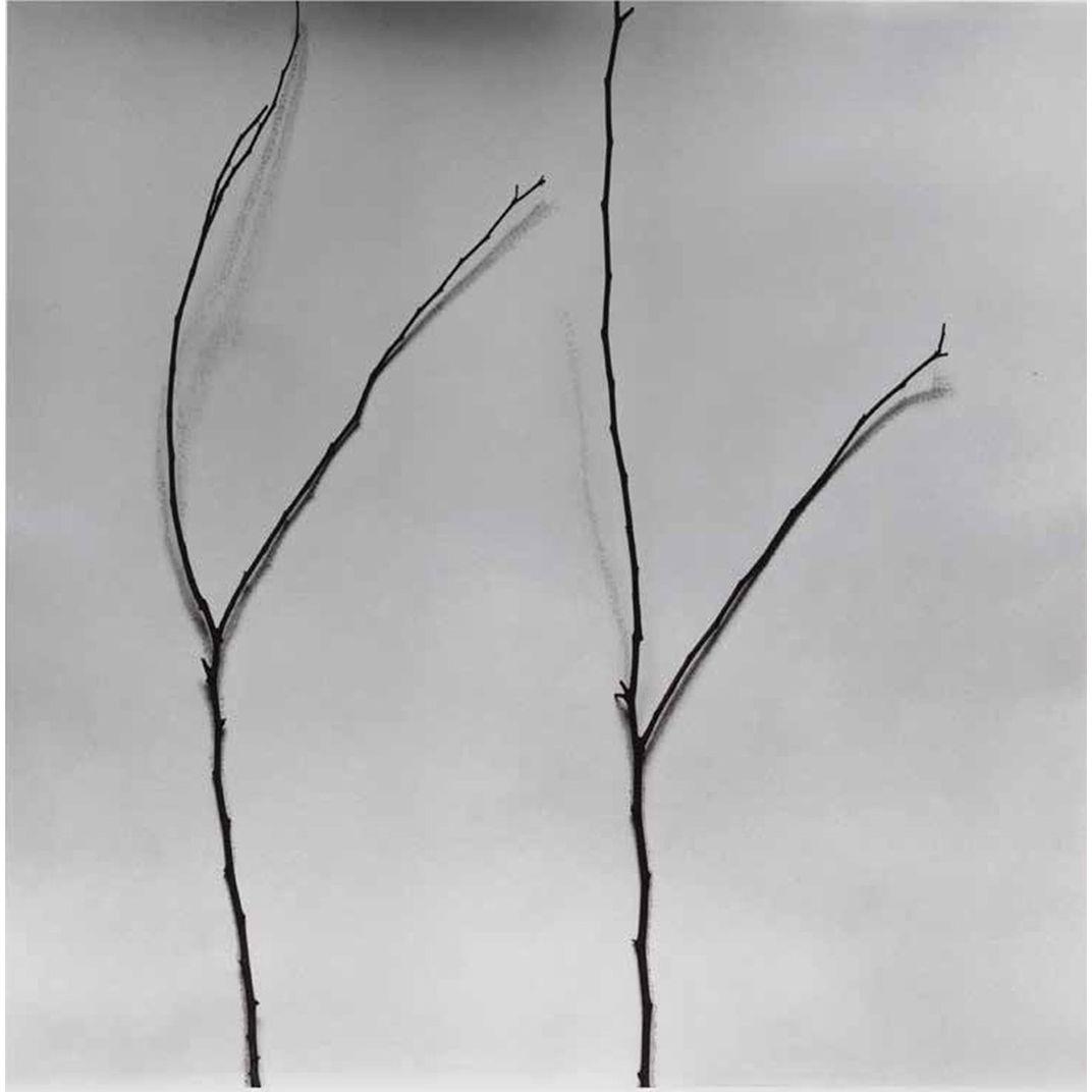 Whispers of Trees-Cercis by Chu Chu