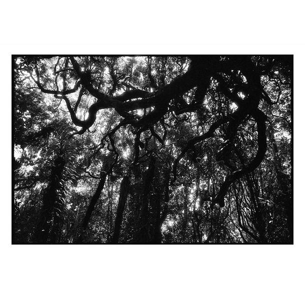 Kapiti Island Tree Canopy #4 by Damian Seagar
