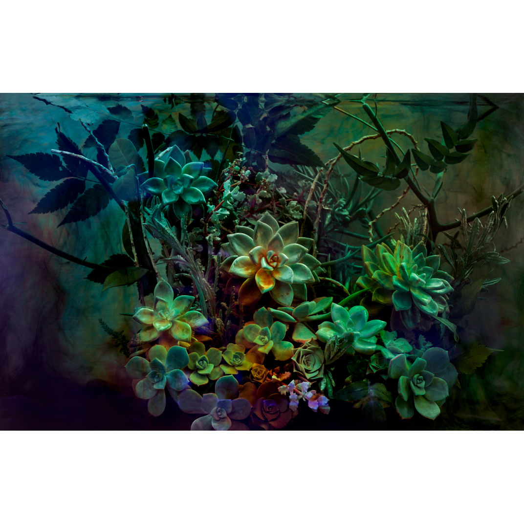 The Emerald Desert by Javiera Estrada