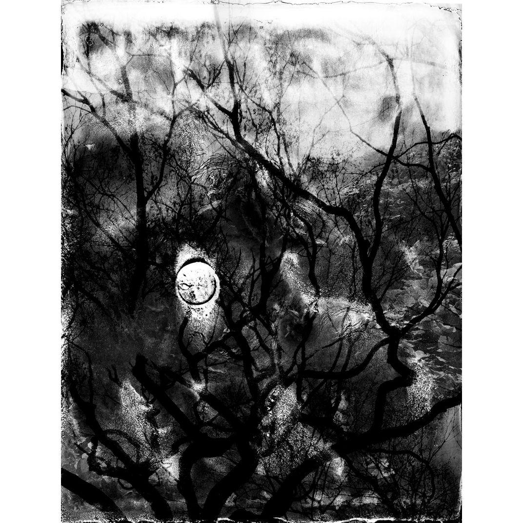 Spirit of Forest 07 by Yasuo Kiyonaga