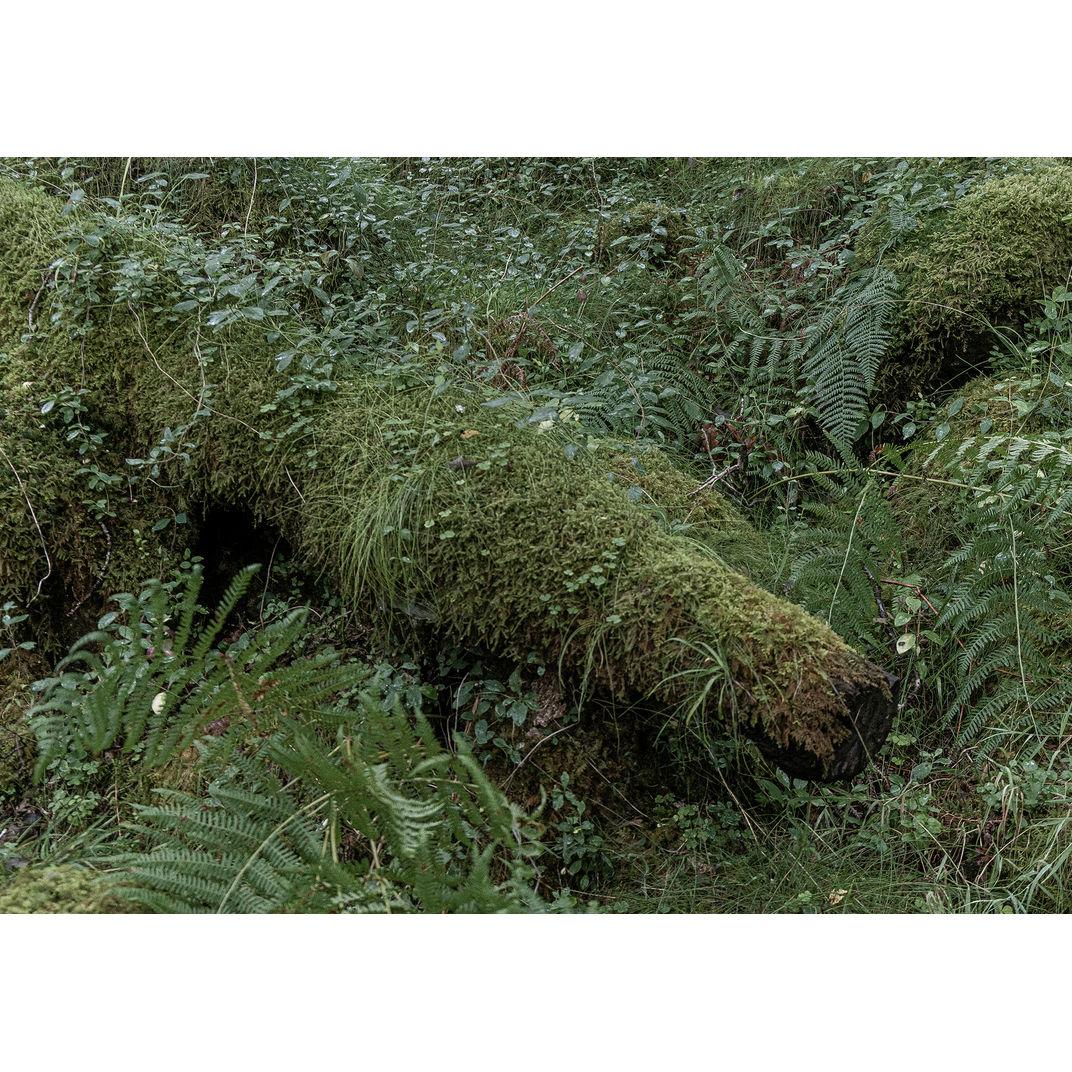 The grass I step on by Julia Mota