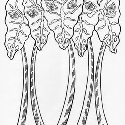 Leering Alocasia – Inked Drawings (2017) by Sharon Chin