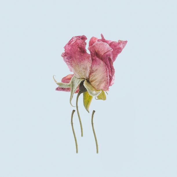 Death of Beauties by Yuyang Liu