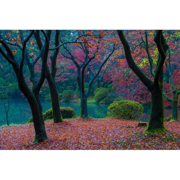 Autumn Forest 2 by Chinnaphong Mungsiri