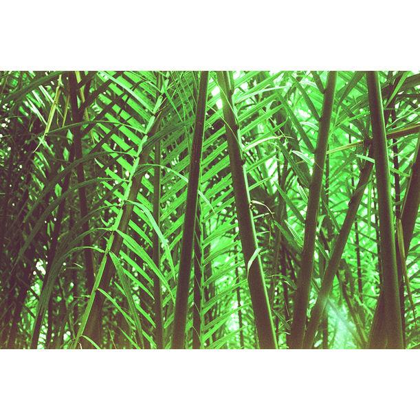 Jungle Maze by gutterdust