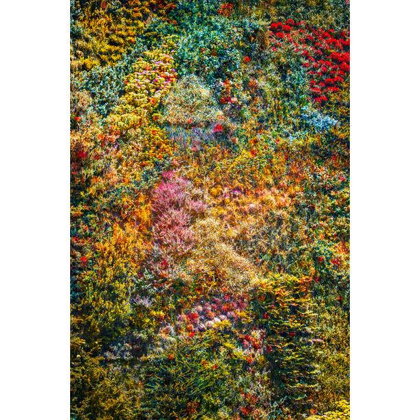 Wall of Nature I by Viet Ha Tran