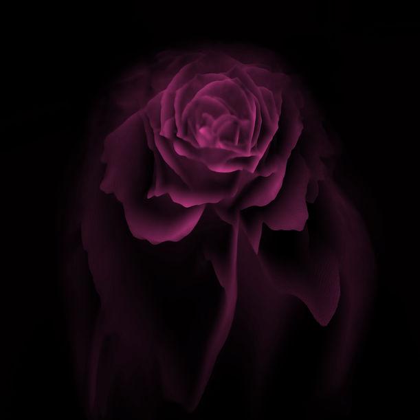 Purple rose by Larisa Siverina