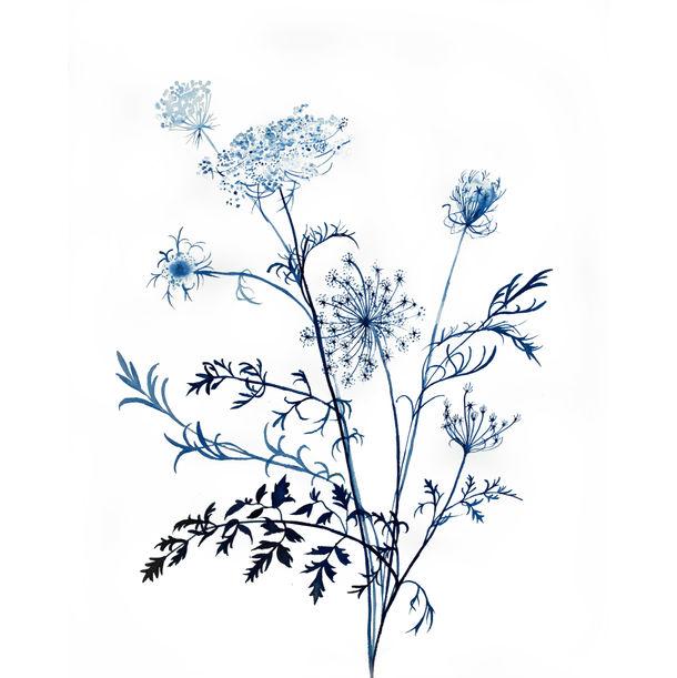 Queen Anne's Lace No. 11 by Elizabeth Becker