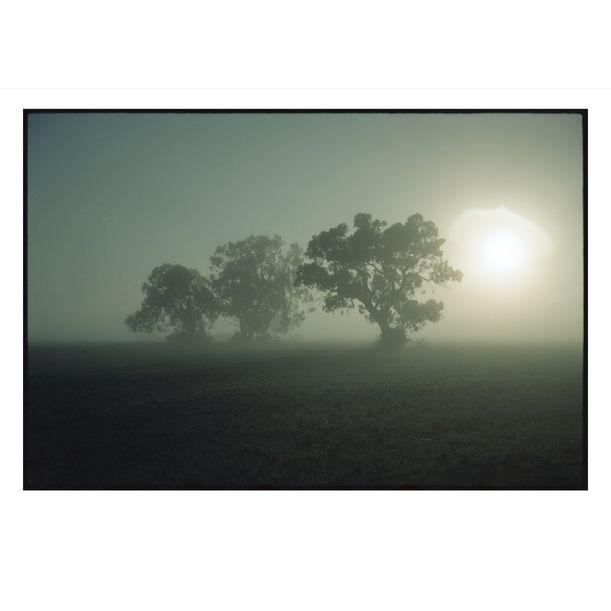 Barmah Misty Morning by Damian Seagar