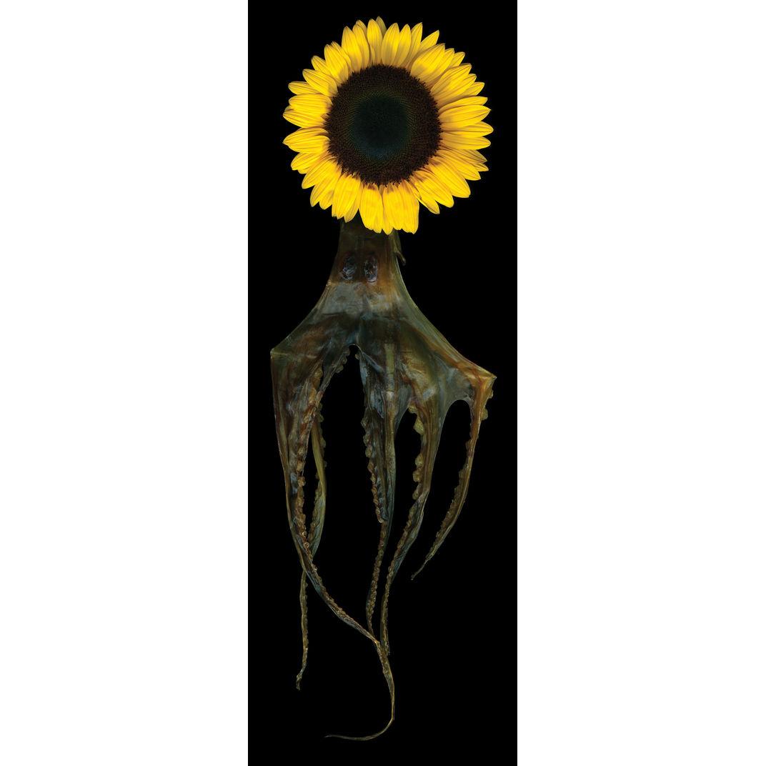 Octopus by Angki Purbandono
