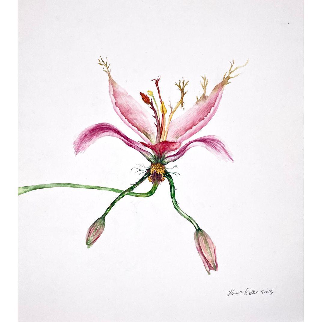 Hybrid Flowers_Lily1 by Jiwon Rhie