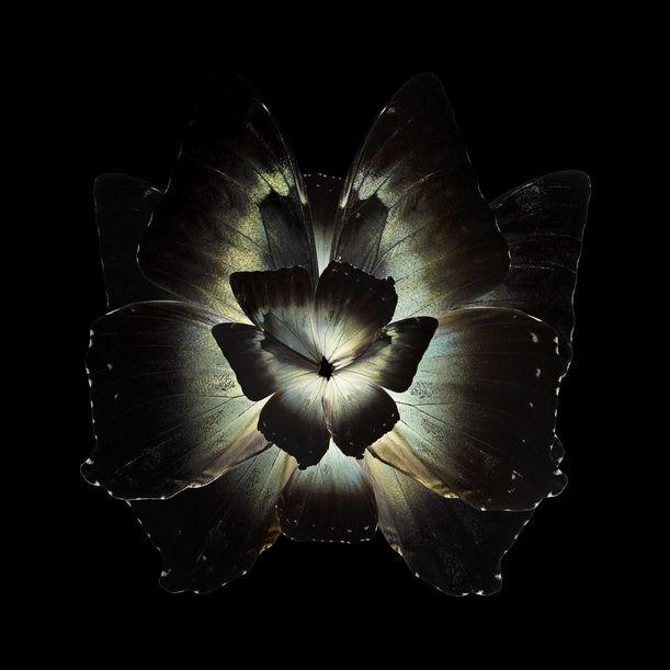 MIMESIS Tradescantia Ganymedia by Seb Janiak