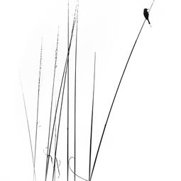 The minimal impressions of nature by swapnil deshpande