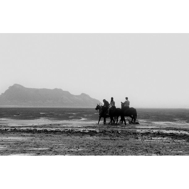 Horses by Ian Sanderson