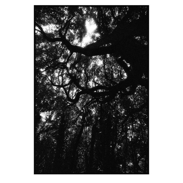 Kapiti Island Tree Canopy #3 by Damian Seagar