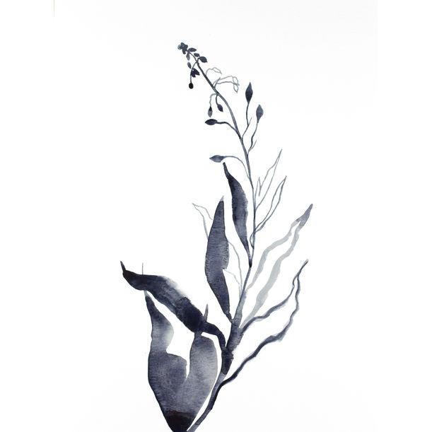 Plant Study No. 78 by Elizabeth Becker