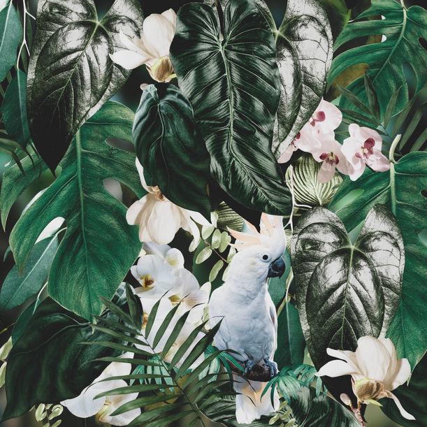 White parrot by Larisa Siverina