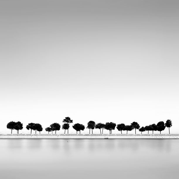 Happy trees by Alexandre Manuel