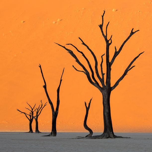 Deadvlei Sunset by Stephen King
