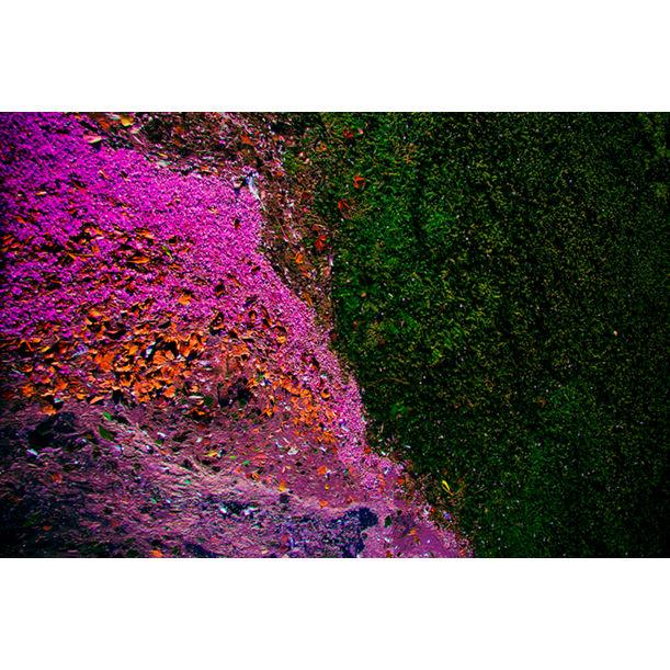 Ecosystem IV by Viet Ha Tran