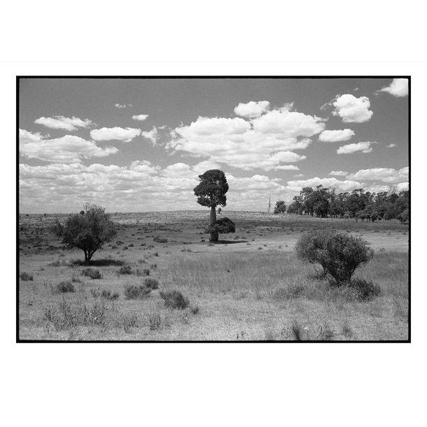 A Baobab by Damian Seagar