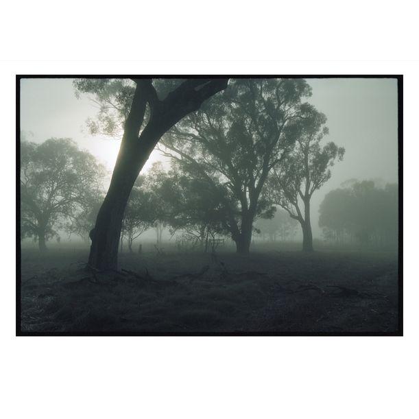 Yielima Misty Morning by Damian Seagar