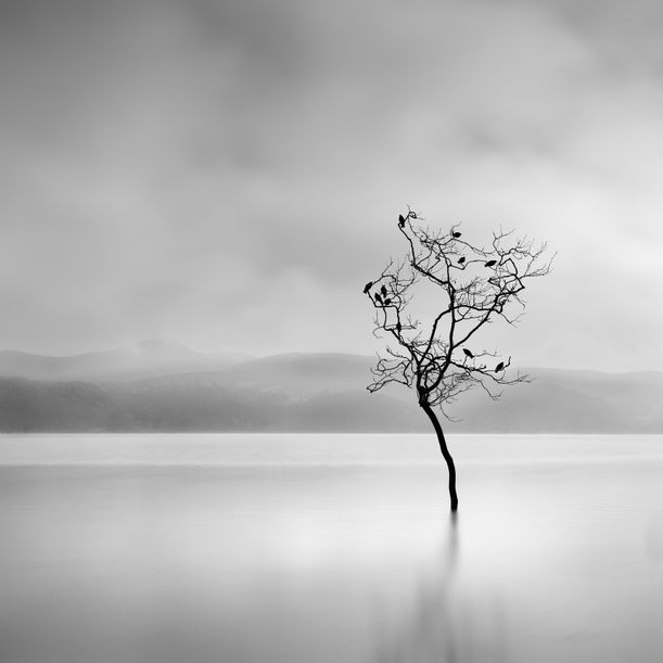 Winter Birds by George Digalakis
