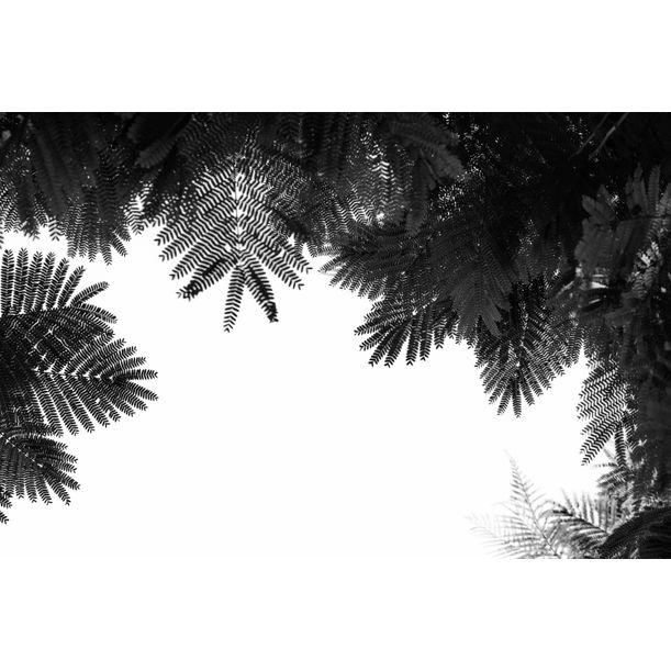 The Tree Top II by Tal Paz-Fridman