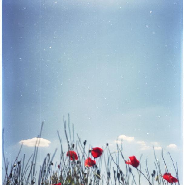 Poppies IV. by Ági Vedres