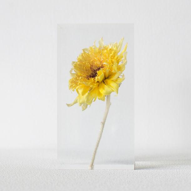 Sunflower Van Gogh by Takao Inoue
