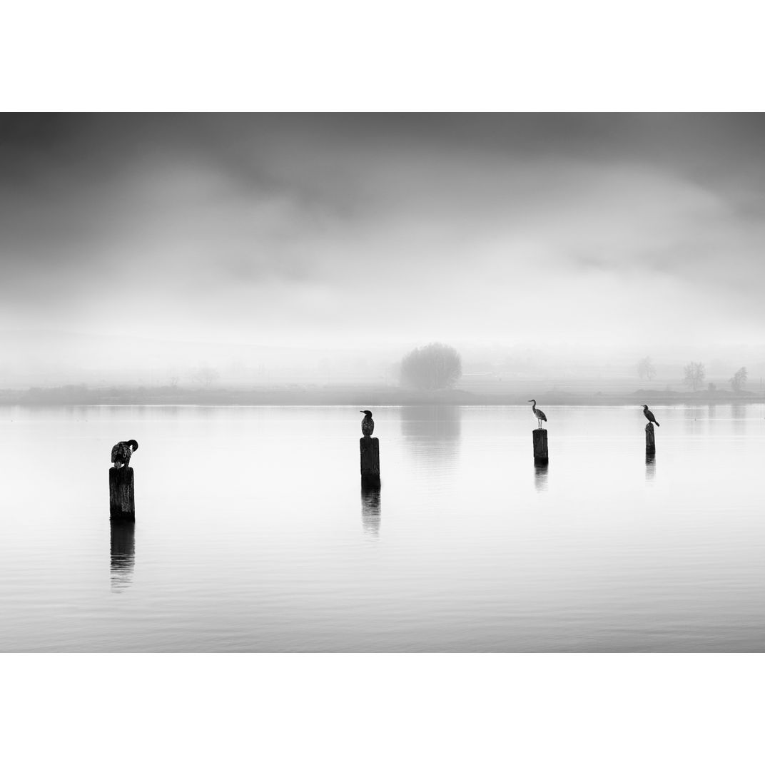 Three Cormorants and one Heron by George Digalakis
