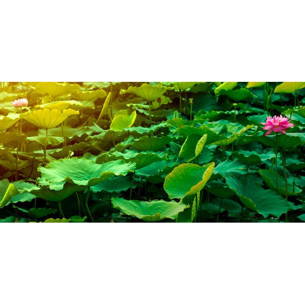 The Lotus Flower II by Viet Ha Tran