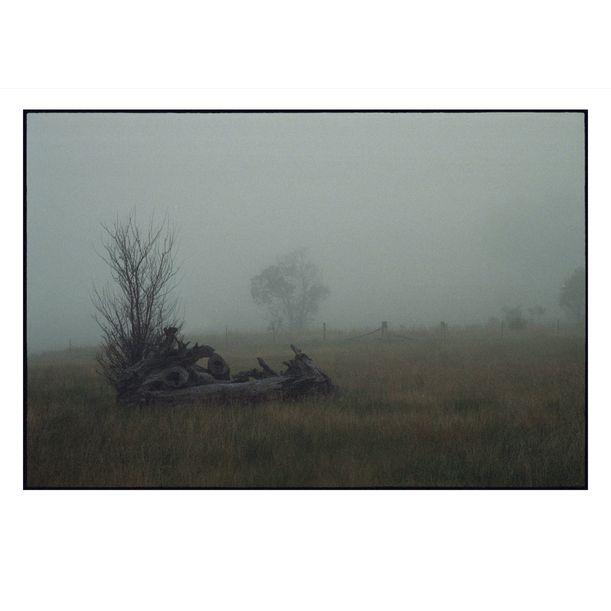 Korweinguboora Misty Morning by Damian Seagar