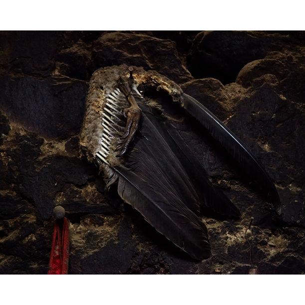 Wing, Peru by Ty Mecham