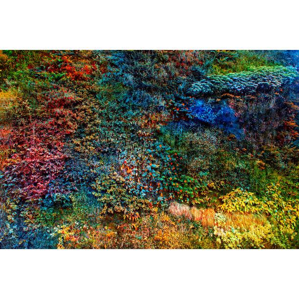 Wall of Nature VI by Viet Ha Tran