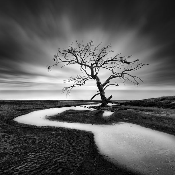 The Crying Tree by George Digalakis