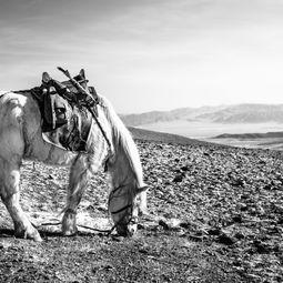 Horse Grazes on Mountain by Shirren Lim