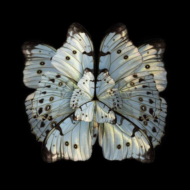 Mimesis - Hibiscus Trinium by Seb Janiak